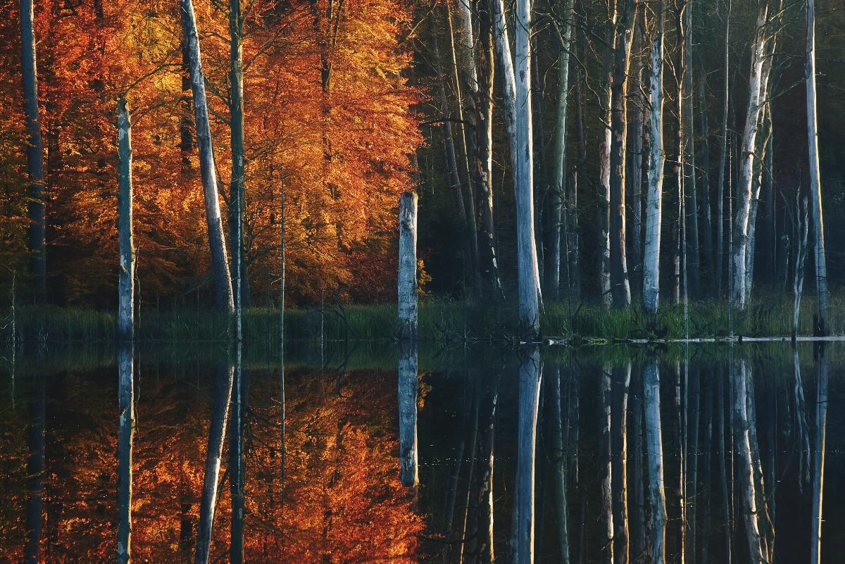 Digital Photography: Autumn At The Lake Series