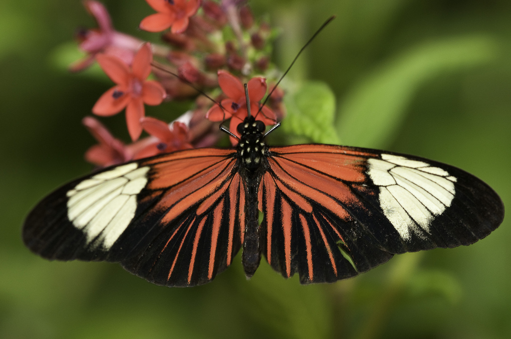 Insanely Beautiful Butterflies