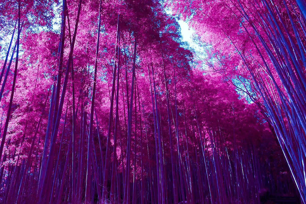 Wallpaper of the Week - Infrared Arashiyama Bamboo Grove