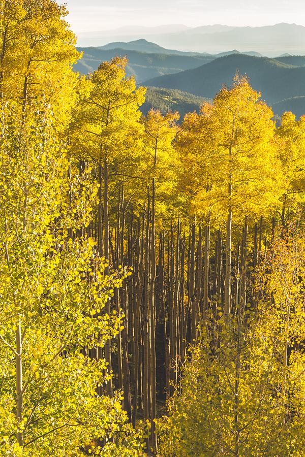 Autumn Splendor by Dave Pluimer