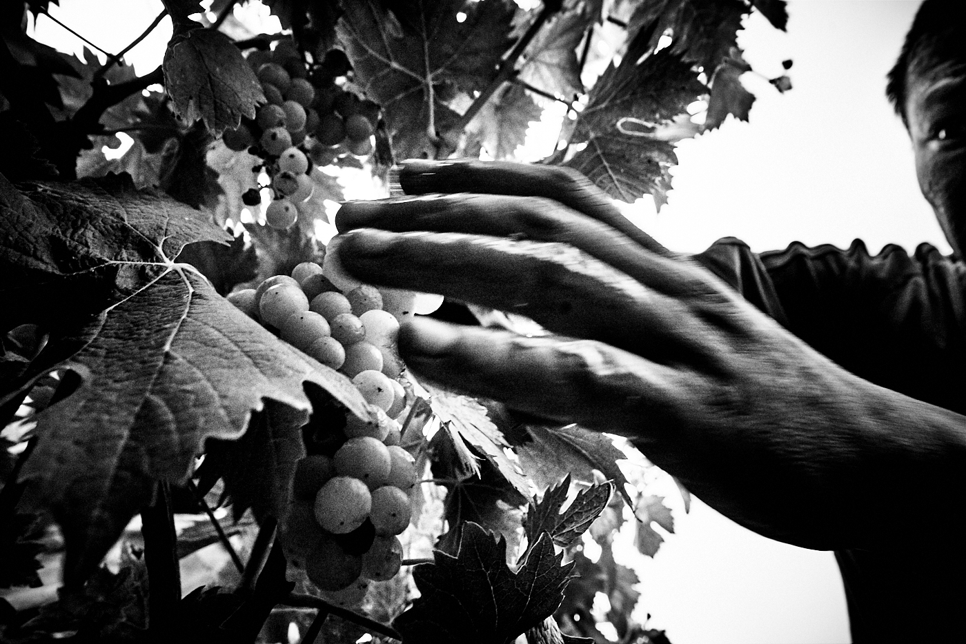 Alessandro Puccinelli's Photographic Celebration of The Harvest