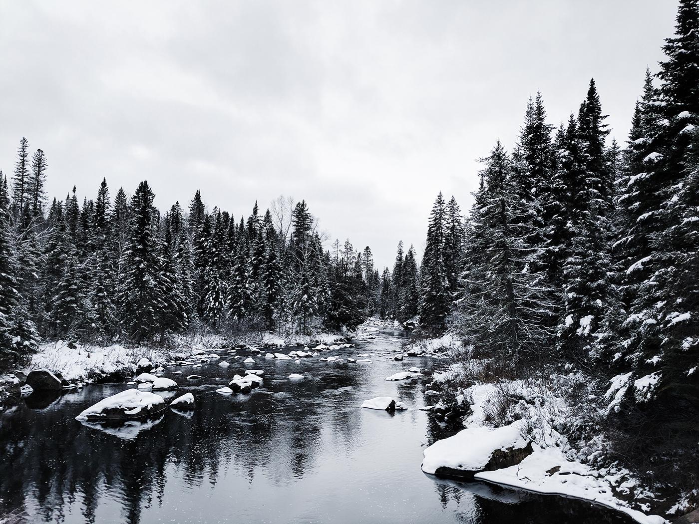 Wallpaper of the Week - Winter Frost
