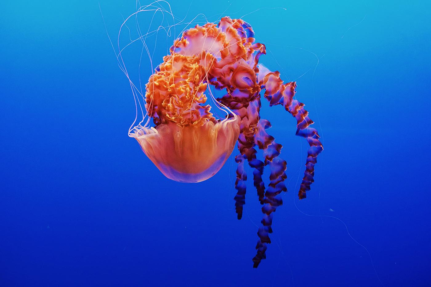 Wallpaper of the Week - Monterey Bay Aquarium