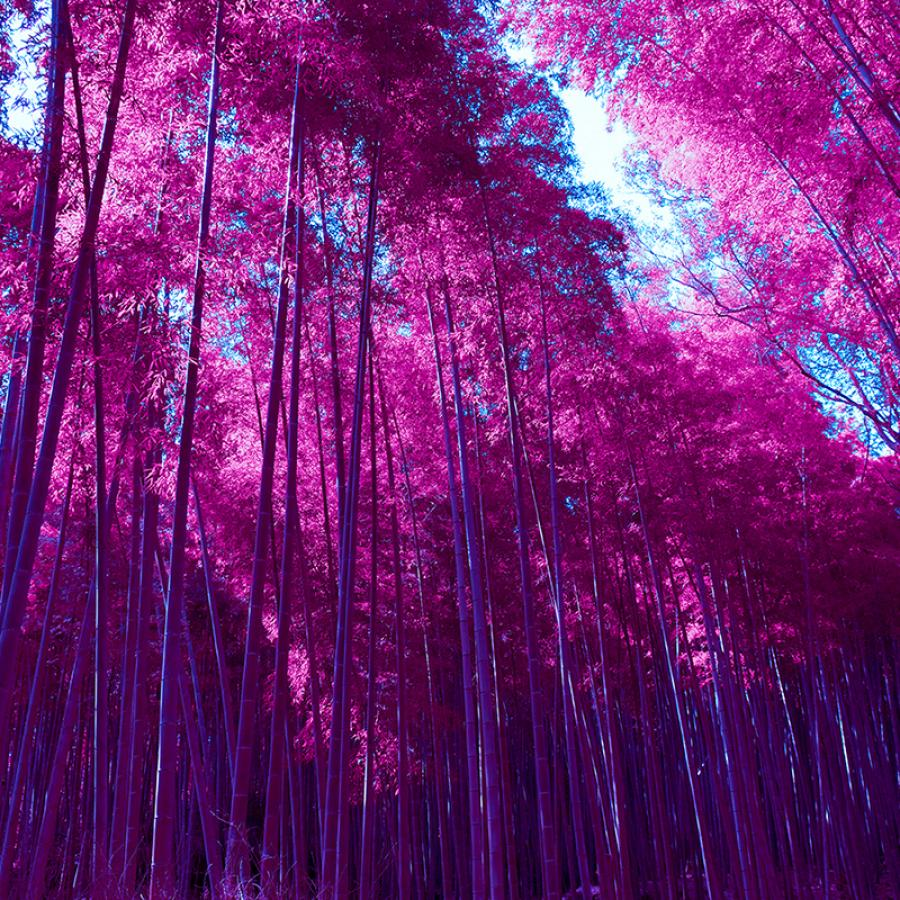 Wallpaper of the Week - Infrared Arashiyama Bamboo Grove