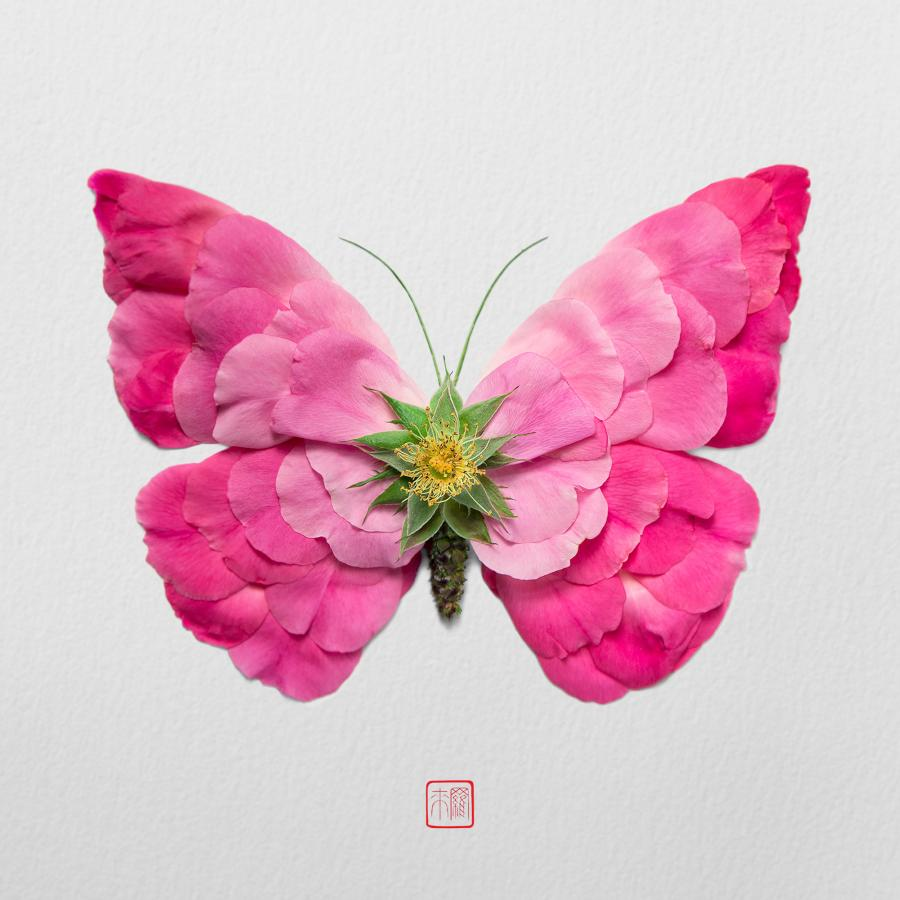 Natura Insects Series6: Crafting insects made by flowers