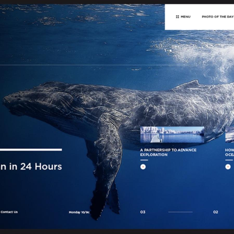 Web Design Concept for National Geographic