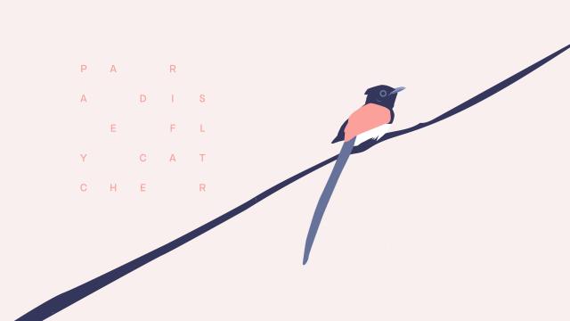 Motion Design - Okomito Animated Typeface