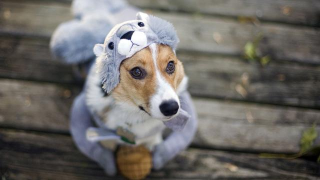 Fun Dogs in Halloween Costumes