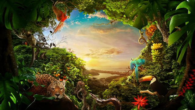 Nature of Brazil Photo Illustration