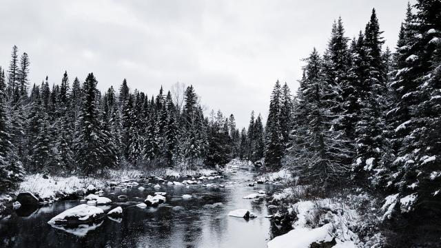 Wallpaper of the Week - Winter Frost