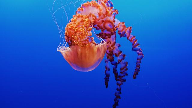 Wallpaper of the Week - Monterey Bay Aquarium