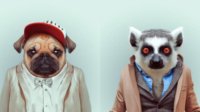 Adorable Zoo Portraits by Yago Partal